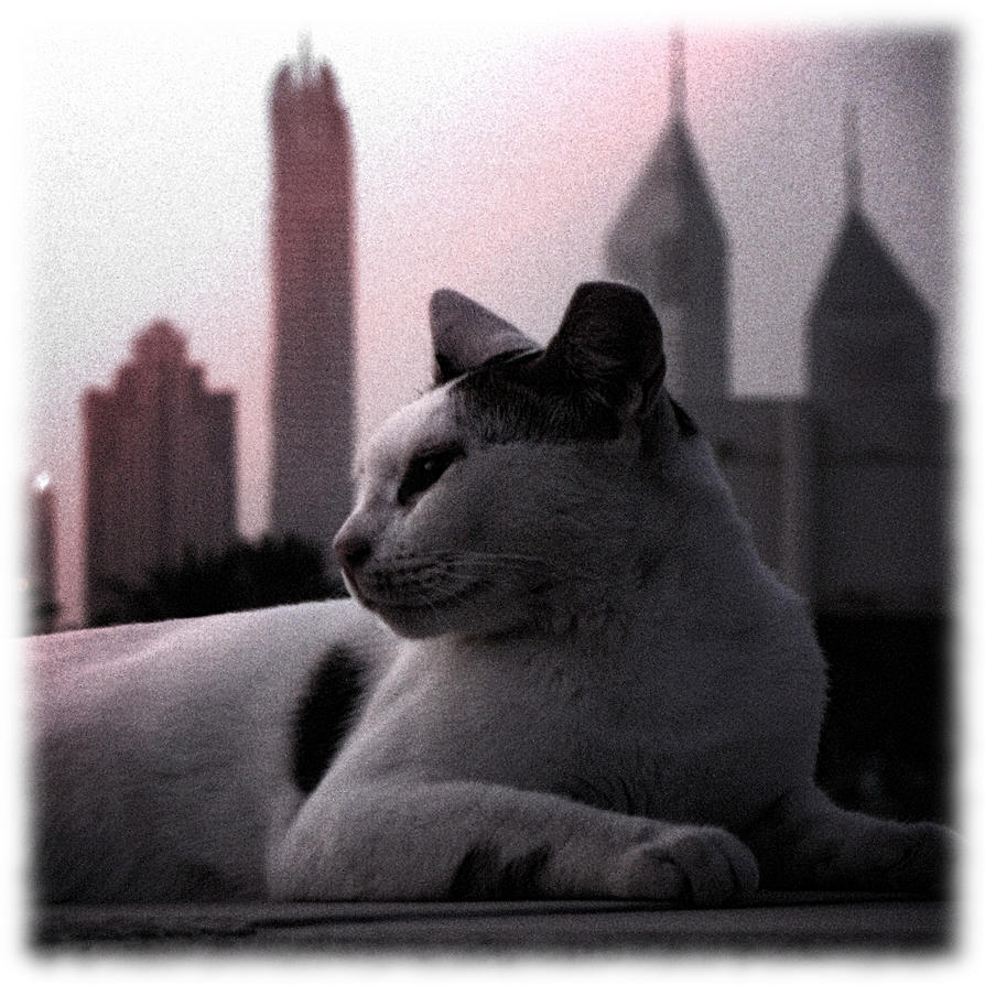 Sheikha Kitty by MARX77
