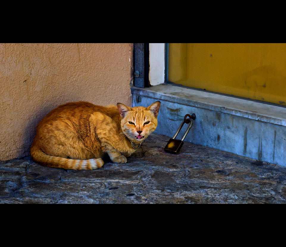 Urban Cats - 07 by MARX77