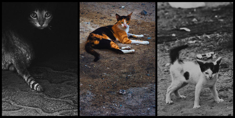 Three Felines In Three Minutes by MARX77
