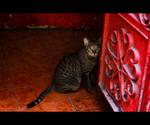 Urban Cats - 24