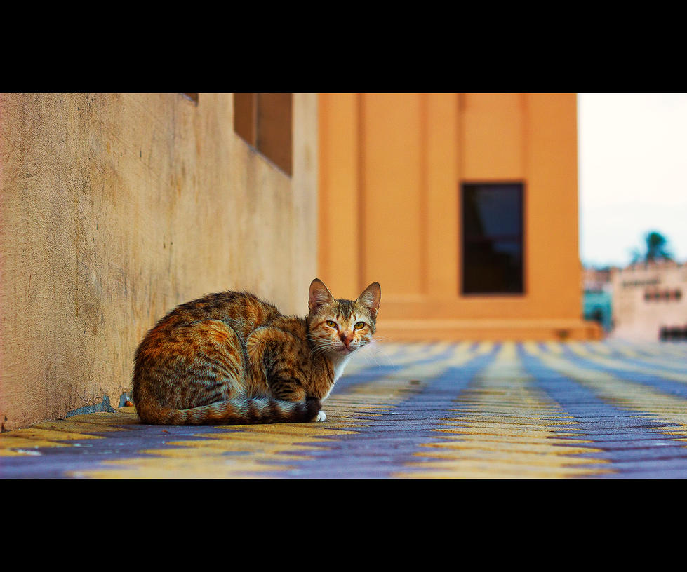 Urban Cats - 33 by MARX77