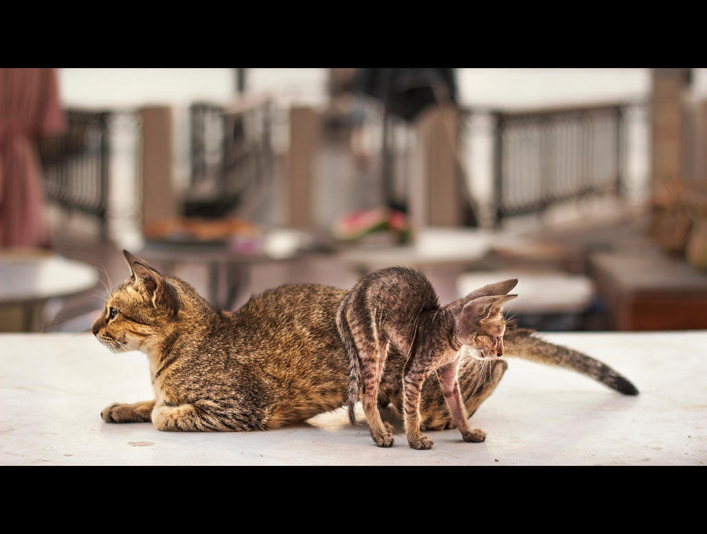 Urban Cats - 42 by MARX77