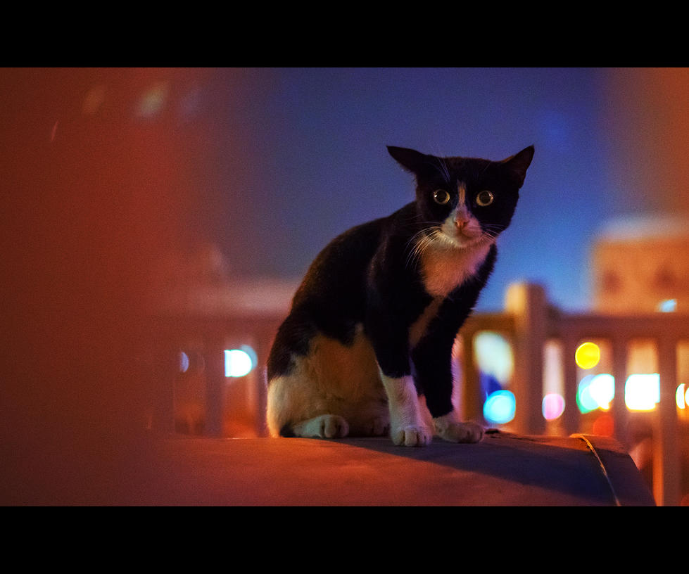 Urban Cats - 46 by MARX77