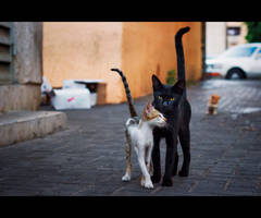 Urban Cats - 48 by MARX77