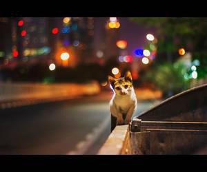 Urban Cats - 49