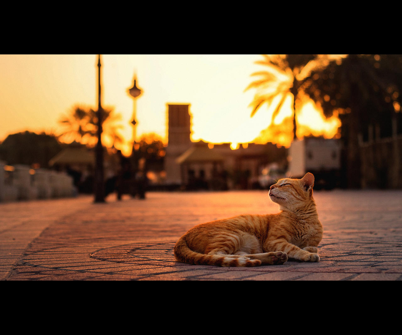Urban Cats - 62 by MARX77
