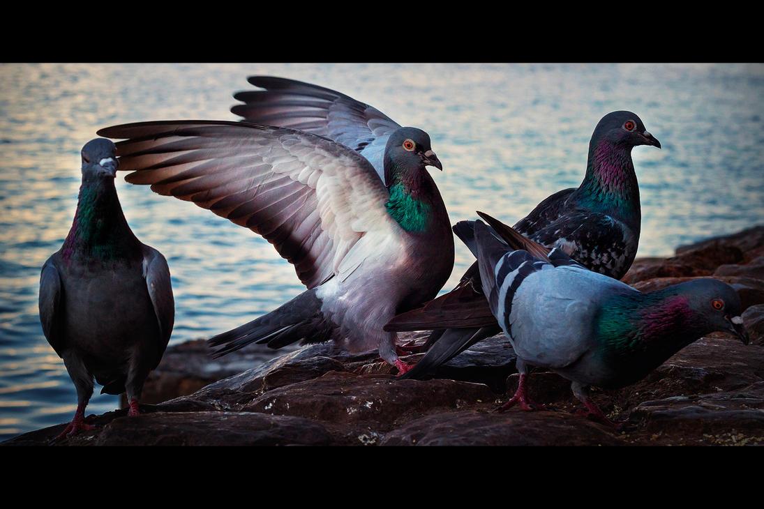 Creekside Pigeons by MARX77
