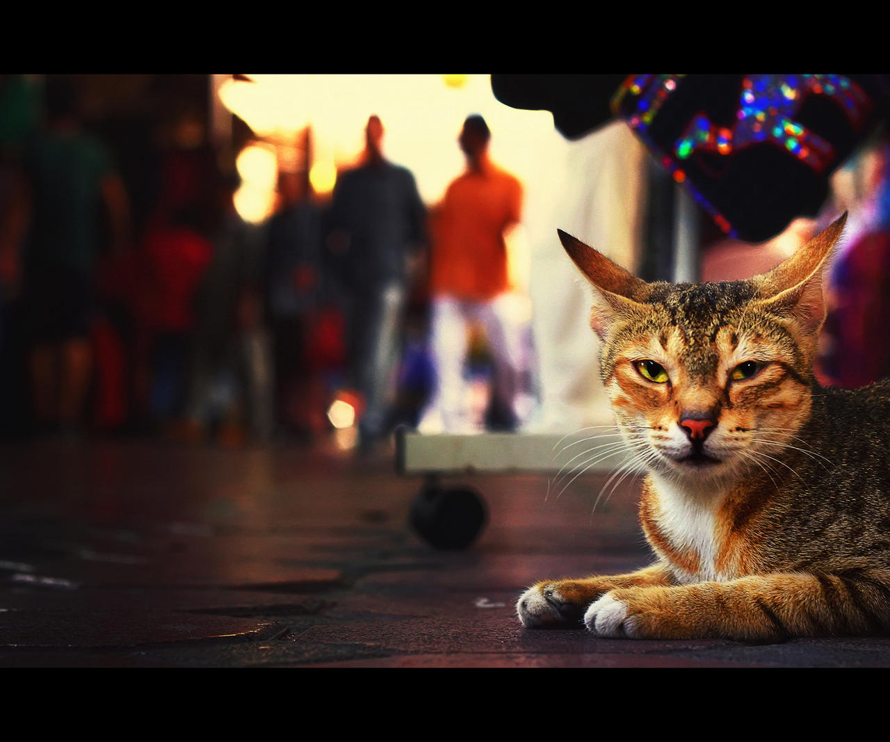 Urban Cats - 67 by MARX77