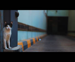 Urban Cats - 68 by MARX77