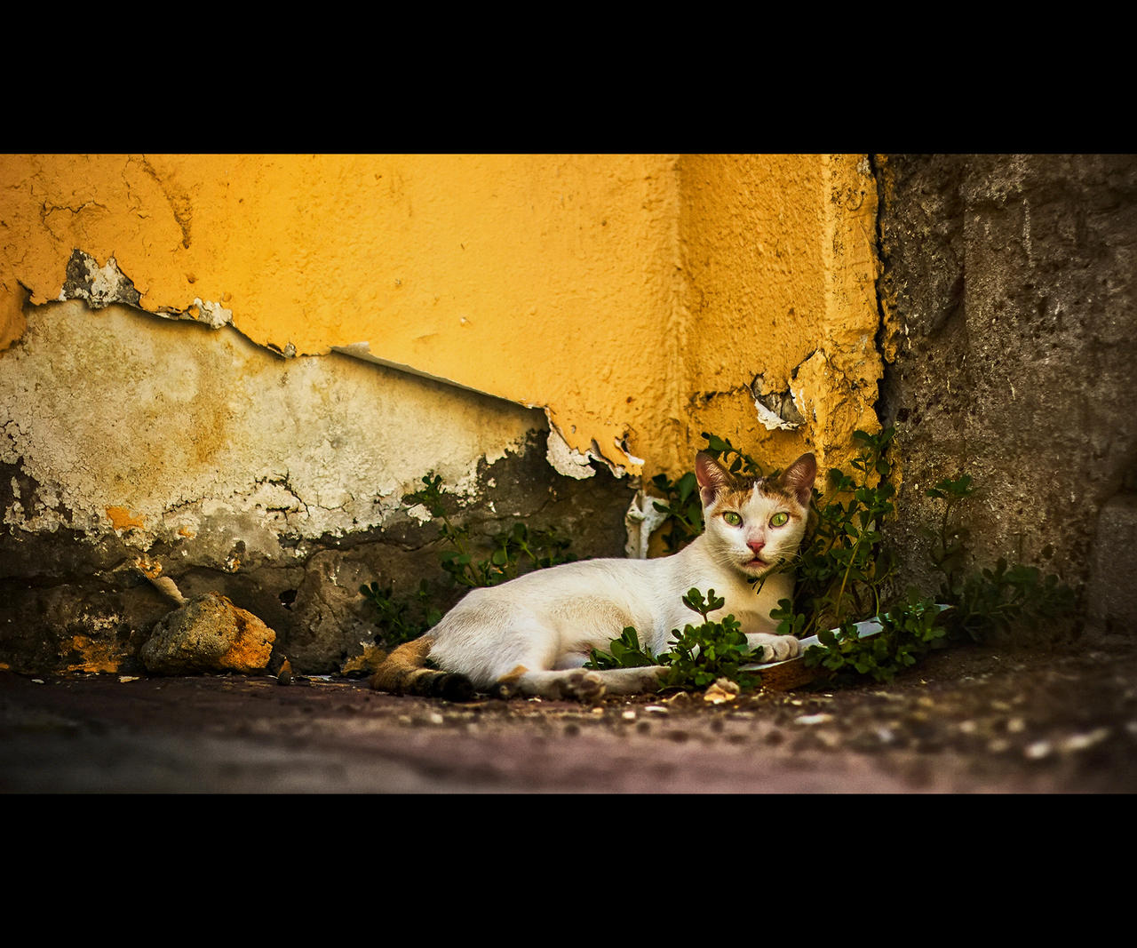 Urban Cats - 71 by MARX77