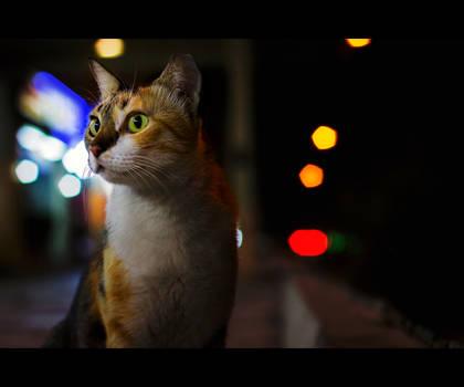 Urban Cats - 73