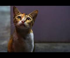 Urban Cats - 83
