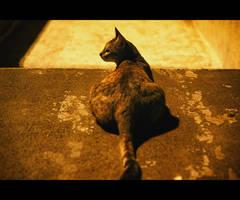 Urban Cats - 92
