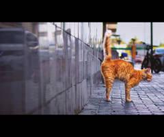Urban Cats - 100