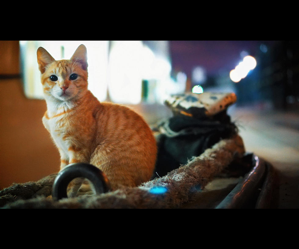 Urban Cats - 103 by MARX77