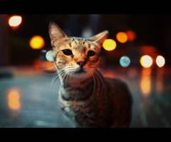 Urban Cats - 105