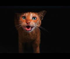 Urban Cats - 112