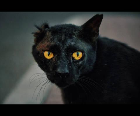 Urban Cats - 115