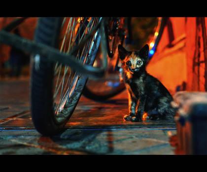 Urban Cats - 120