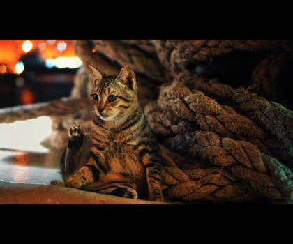 Urban Cats - 122