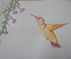 Hummingbird by Khrys90