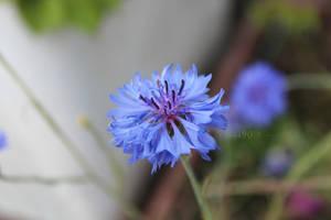 Little blue by Khrys90