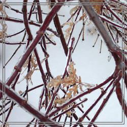 Ice Leaf by MuseSusan