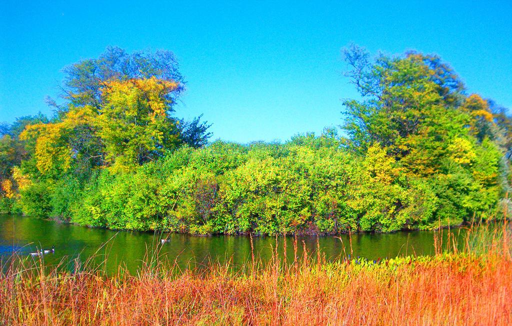 The Pond by darkriddle1