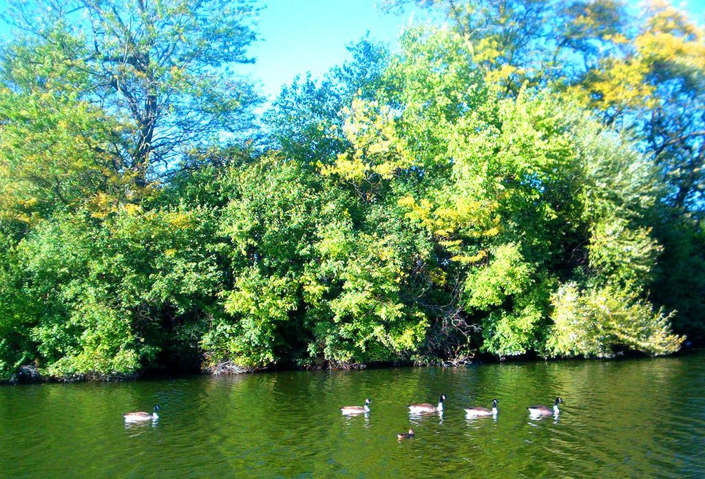Secret Duck Pass by darkriddle1