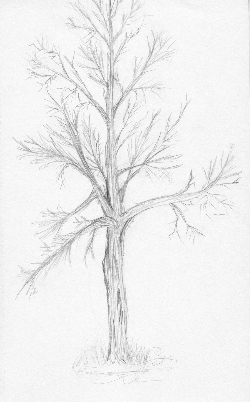 Tree Sketch Tree Sketc...