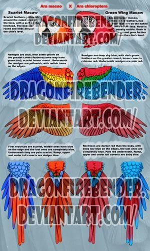 Ara macao X Ara chloroptera by DragonFirebender