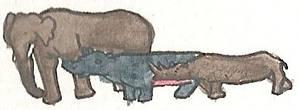 Elephant, Hippo and Rhino