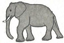 African elephant by brazilianferalcat