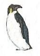 Emperor penguin by brazilianferalcat