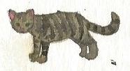 Gray tabby shorthaired cat by brazilianferalcat