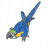 Blue and gold Macaw by brazilianferalcat