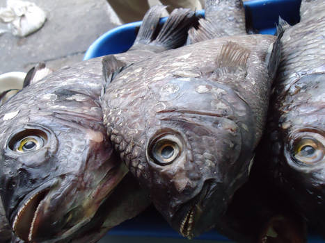 it smells fish
