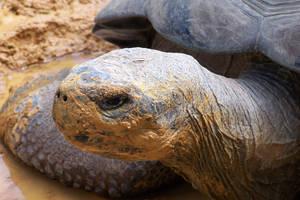 Galapagos Tortoise by idril-telemnar