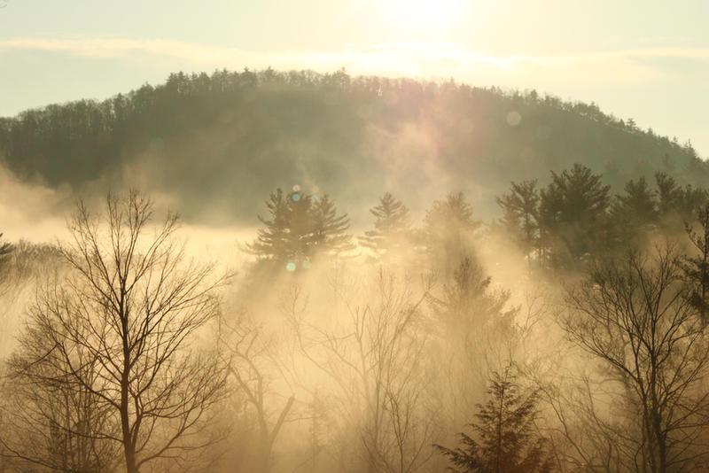 Morning Fog by ChristyTortland