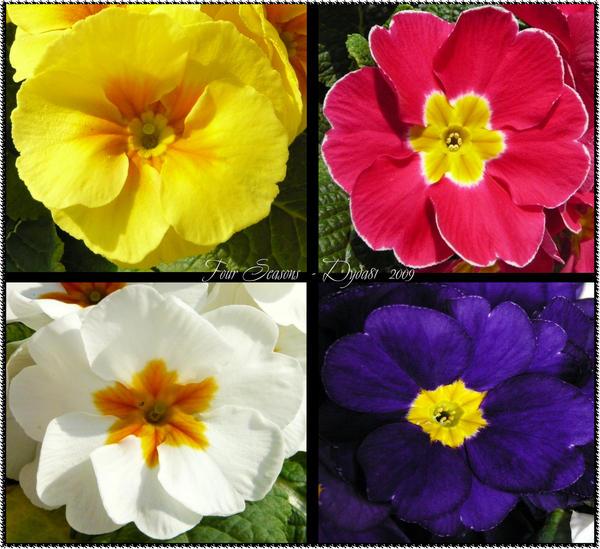 Four Seasons Plants Garden Decor Wanneroo Wa