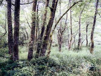 Chemin de Retournemer by TrollDuNord