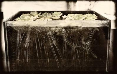 Carnivorous Plants by TrollDuNord