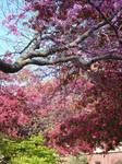 Springtime blooms at UNI