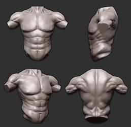Zbrush Practice - Torso ( Anatomy ) by Vasilesco