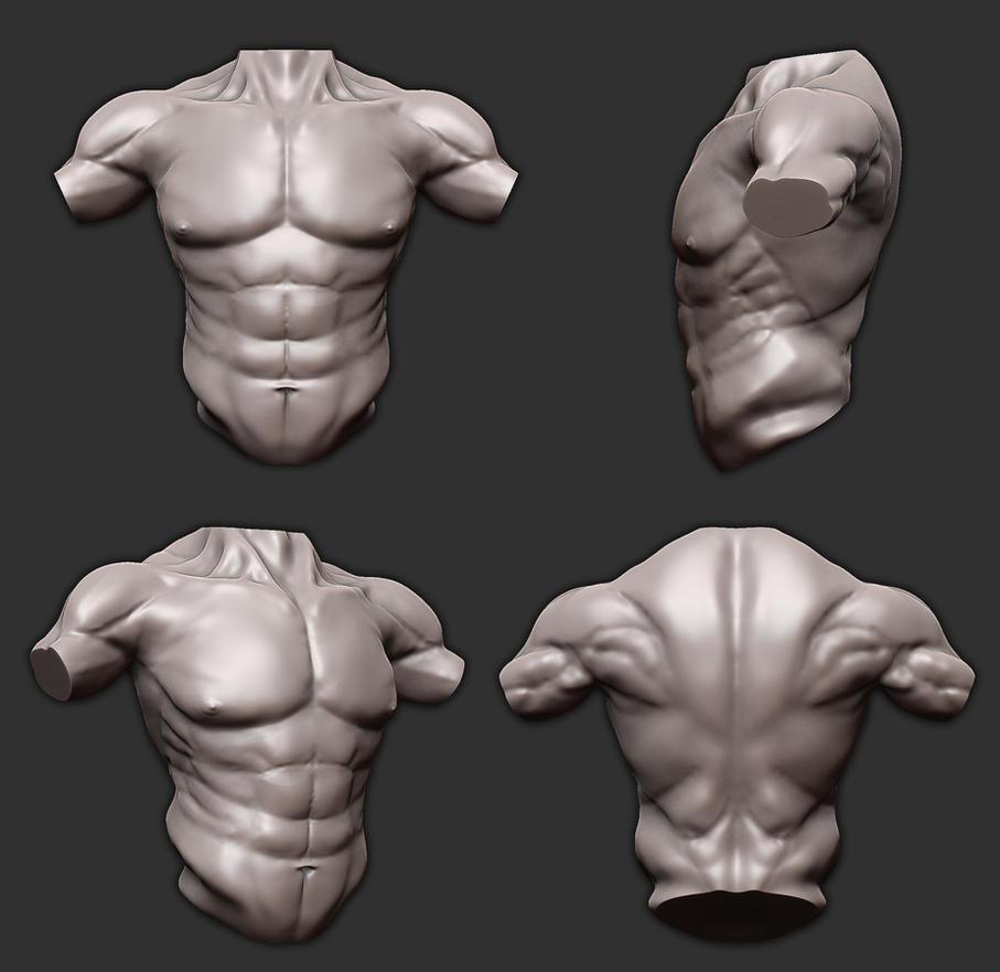 Zbrush Practice - Torso ( Anatomy ) by Vasilesco on DeviantArt