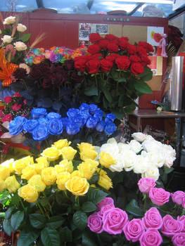 Roses for St. Jordi