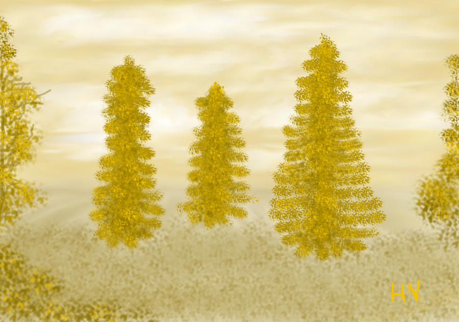 Pine Tree Field. 2012. by HenryValdROCKS