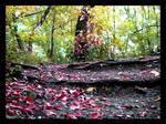 world full of leaves
