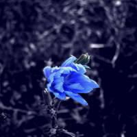 Blue World by Pitrisek
