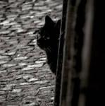 Finding cat